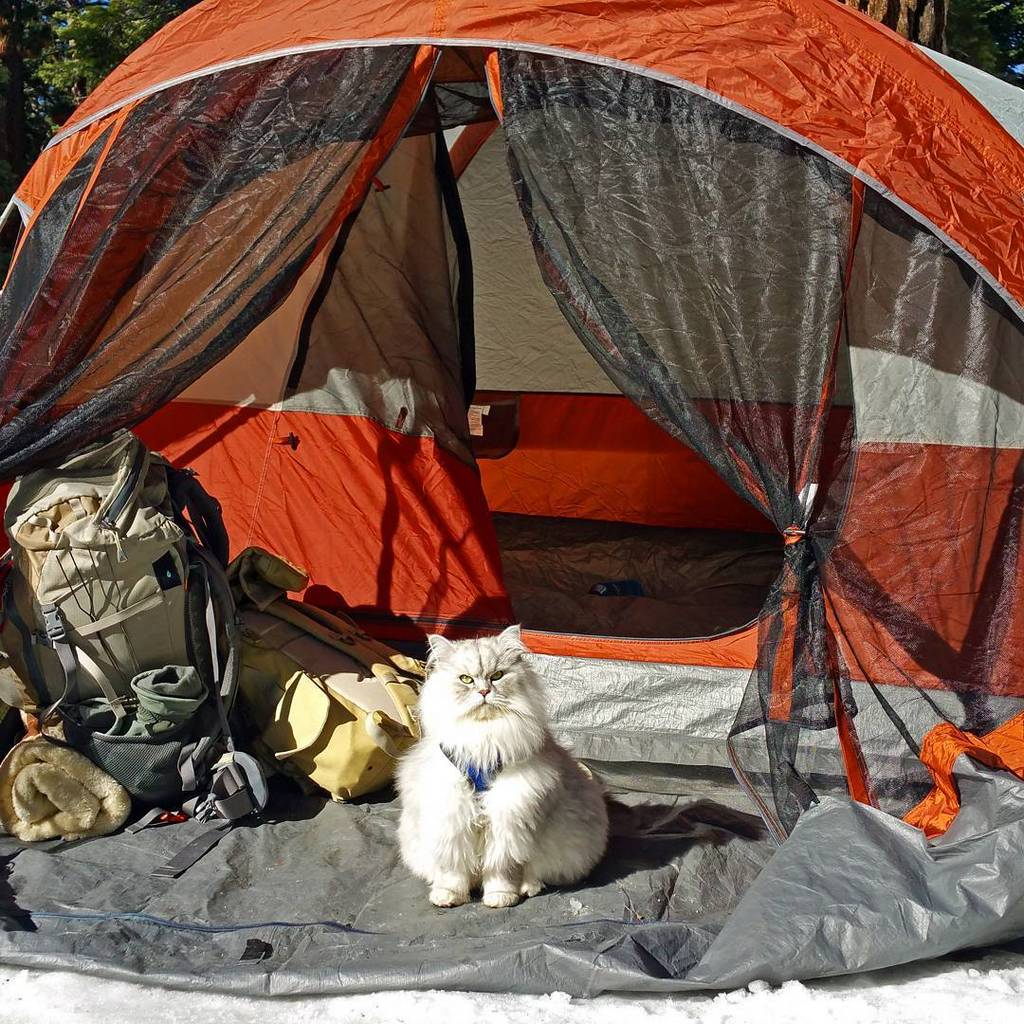 Gandalf is a very famous traveling cat with more than 26,500 followers in Instagram