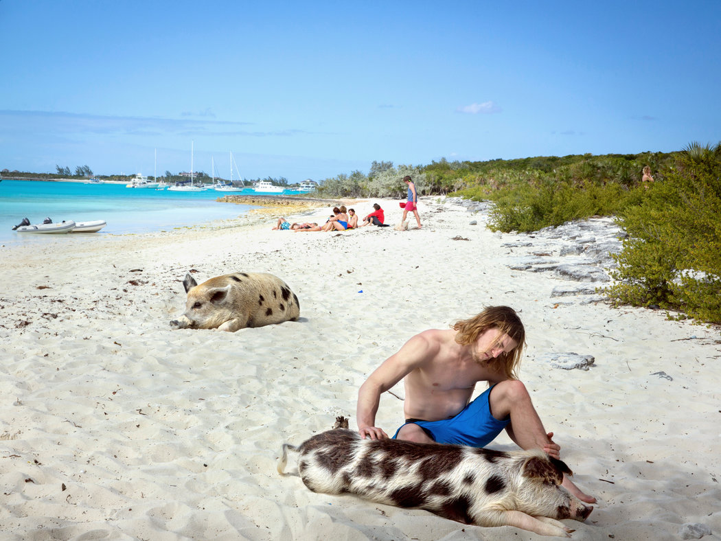 Interspecies bonding, at least for this man. I have to say that this black-and-white teenage pig was the most handsome guy on the island. Credit Robin Schwartz for The New York Times