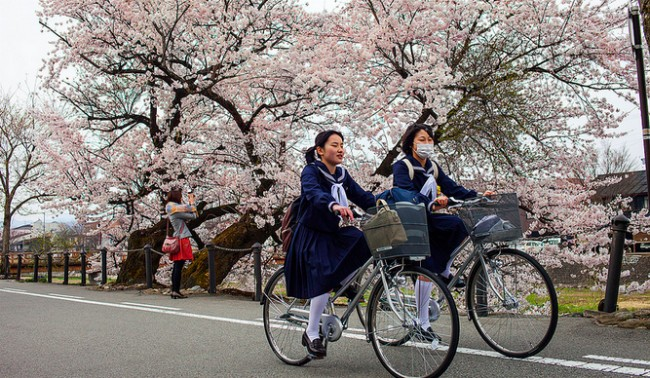Japanese students cherry blossoms beauty spot travel tip where to go