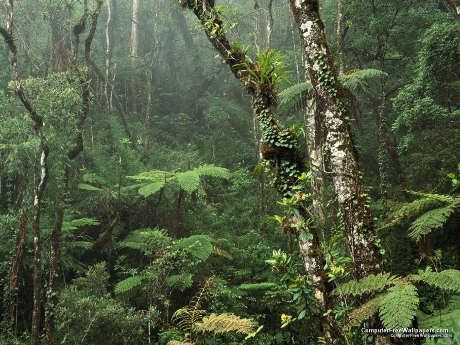 Kinabalu National Park malaysia 2