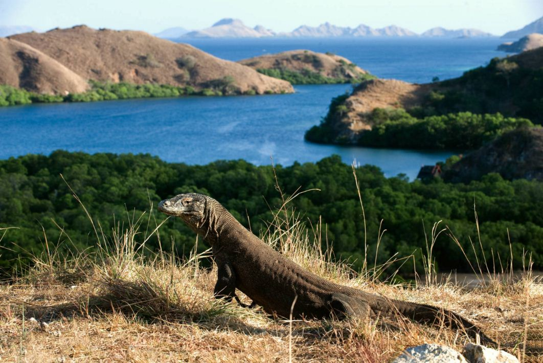 Komodo National Park indonesia 3