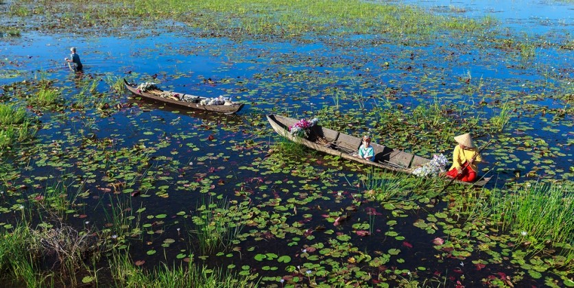 Harvesting water-lilies. Photo: quintessentialcollectionvietnam.com