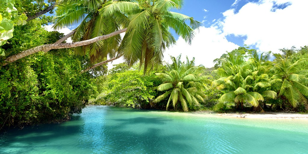 Palm grove on the islands of Seychelles Photo: sfricapoint
