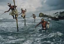 fishing on stilts in sri lanka