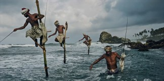 fishing on stilts in sri lanka