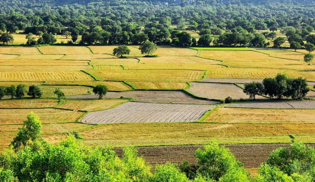 An giang Ta Pa paddy fields Vietnam tourist attraction travel guide