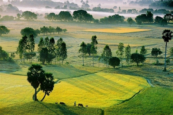 Paddy fields in Ta Pa mountain large carpet green An giang Vietnam travel guide