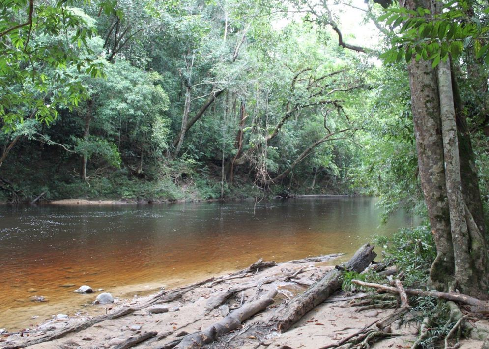 Taman Negara National Park malaysia 2
