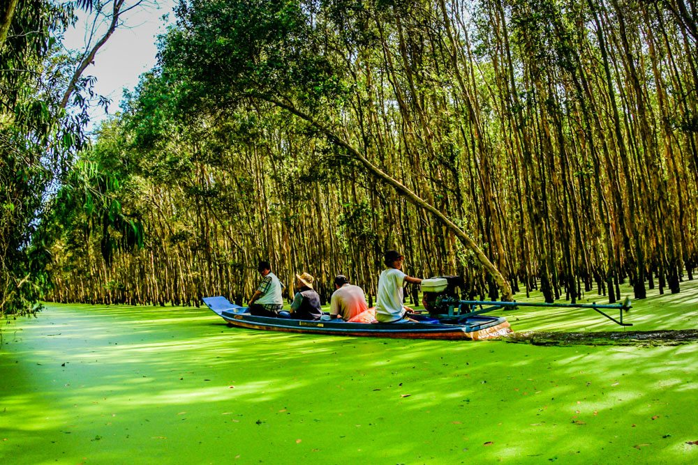Tra Su cajuput forest green An Giang Vietnam destination floating seasons travel guide
