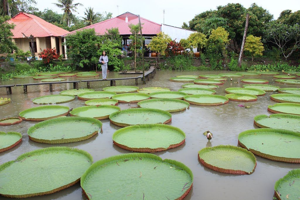 a corner of Phuoc Kien temple with giant lotus leaves