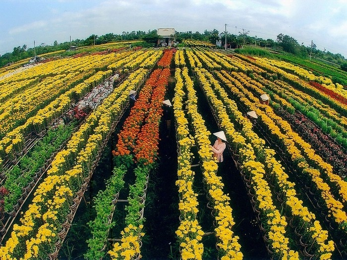 an overview of the immemse colourful flower fileds. photo: mytour.vn