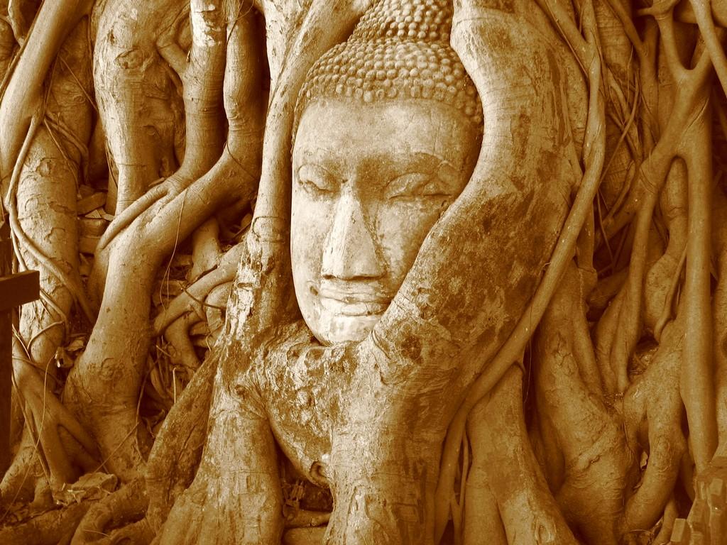 buddha ayutthaya head roots wat mahathat thai history photo tourist attraction