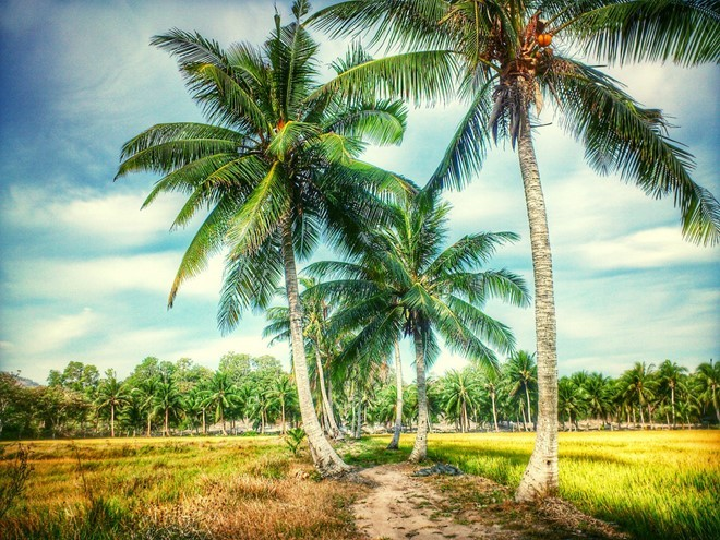 Ben Tre - the land of coconut is one of the greatest destinations you should visit when coming to the Mekong Delta.