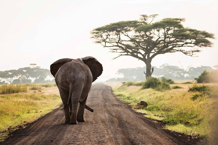 An evocative image of an elephant in Amboseli National Park, Kenya, entered into the competition by Kathleen Ricker. Image by africageographic.com