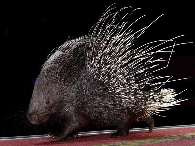 having sex with hedgehogs banned Florida USA