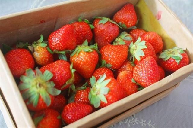 hiep luc strawberry garden in dalat travel tips 5