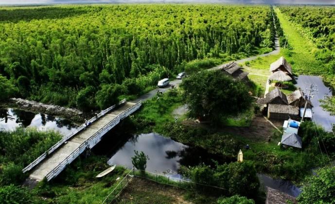 U Minh Ha forest in Ca Mau. Photo: munkie