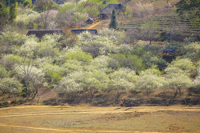 moc chau grassland in spring vietnam photos