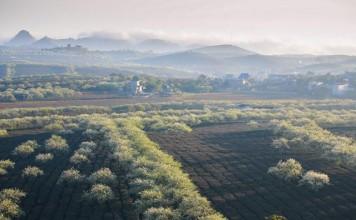 moc chau grassland in spring vietnam photos