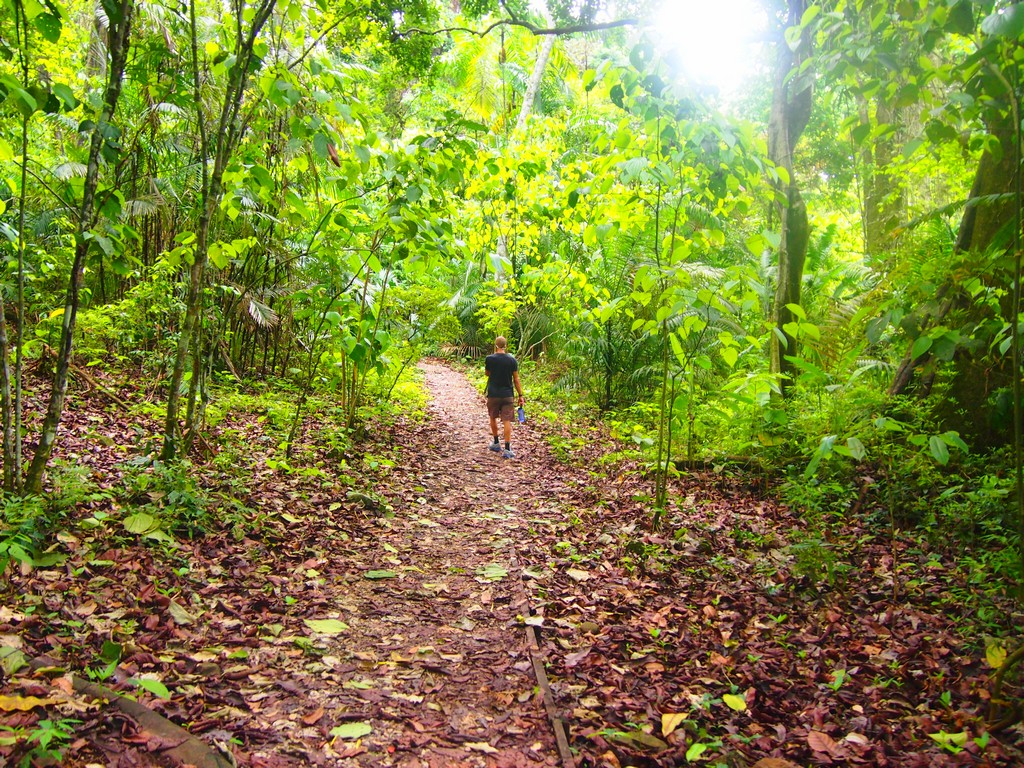 panama rainforest travel guides 12