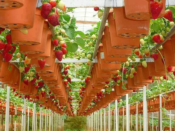 strawberry gardens in dalat city travel guides 2