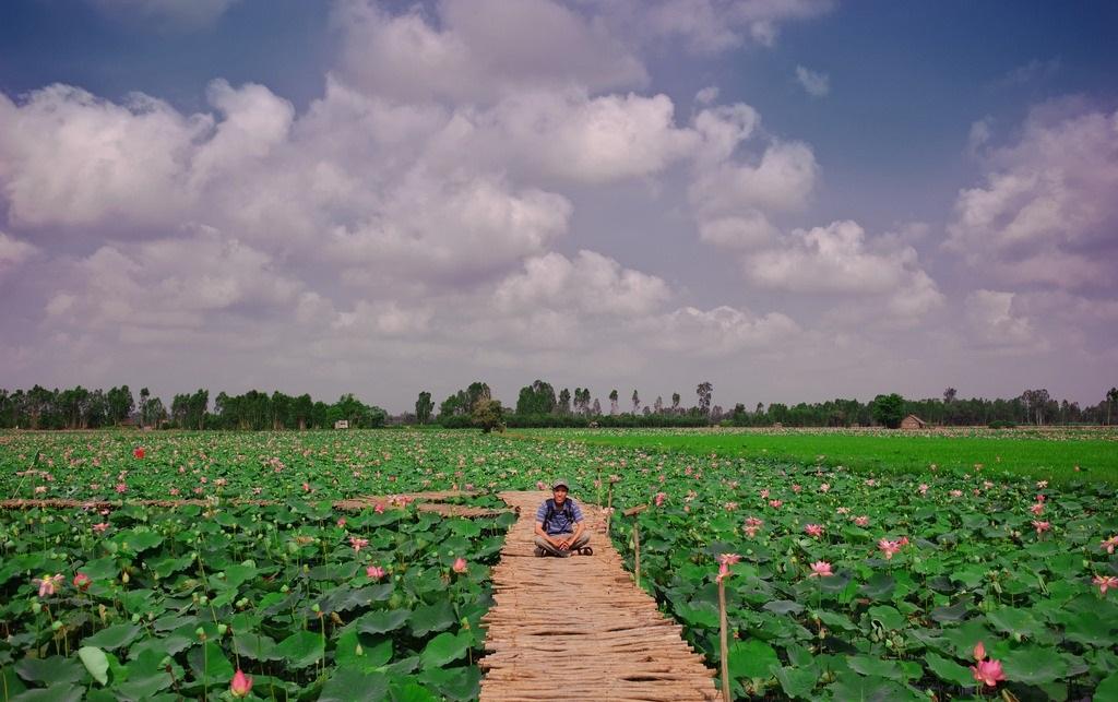 Dong Thap Muoi is famous for lotus. Photo: Steven Khanh Lam/flickr.com