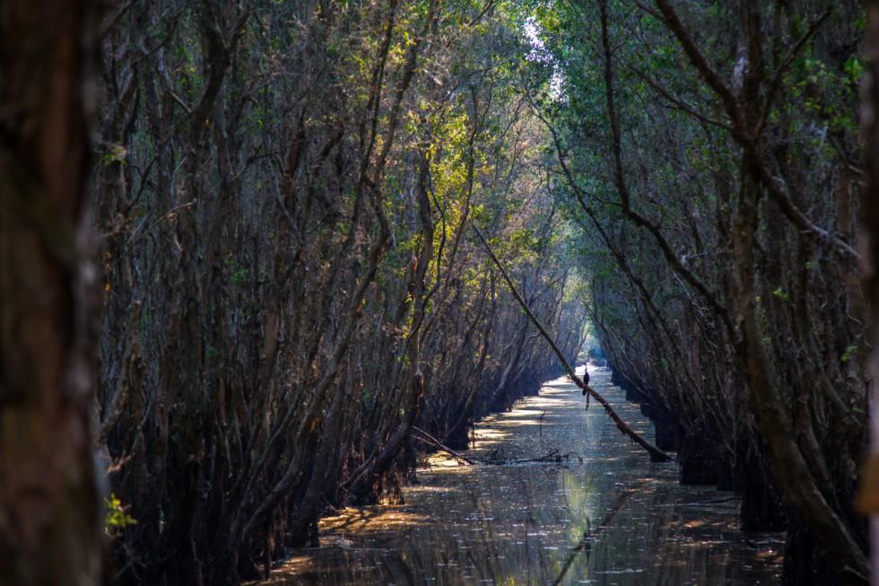 tra-su-cajuput forest an giang vietnam