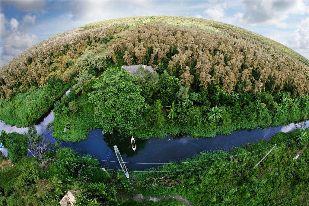 U Minh Ha forest in Ca Mau. Photo: dulichcamau.info