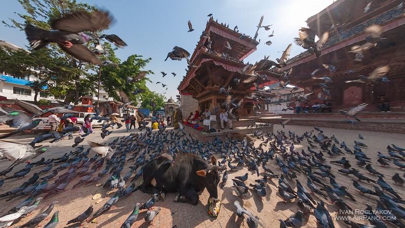 A cow in Durbar Square in Kathmandu, Nepal