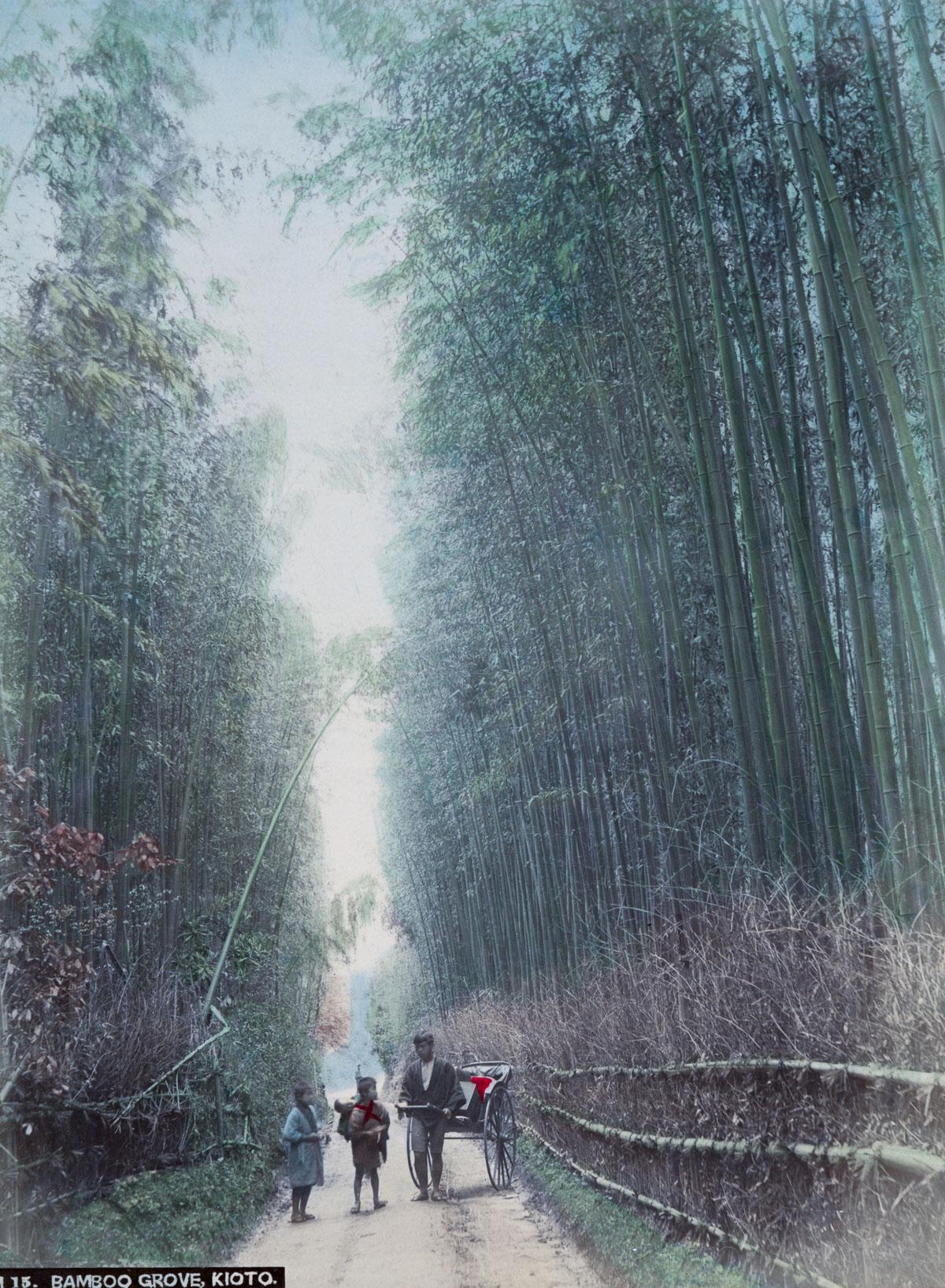 Bamboo Grove, Kioto - Image by New York Public Library