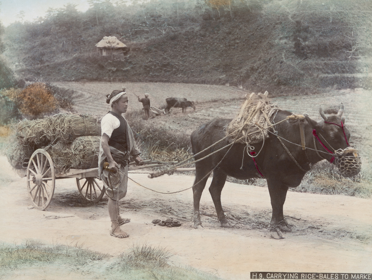 Carrying rice-bales to market - Image by New York Public Library