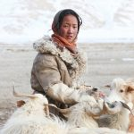 Changpa nomads — No-money, no-technology, and nomadic life of a tribe in the Himalayas