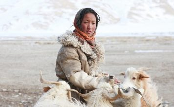 No-money, no-technology, and nomadic life of a tribe in the Himalayas tibet