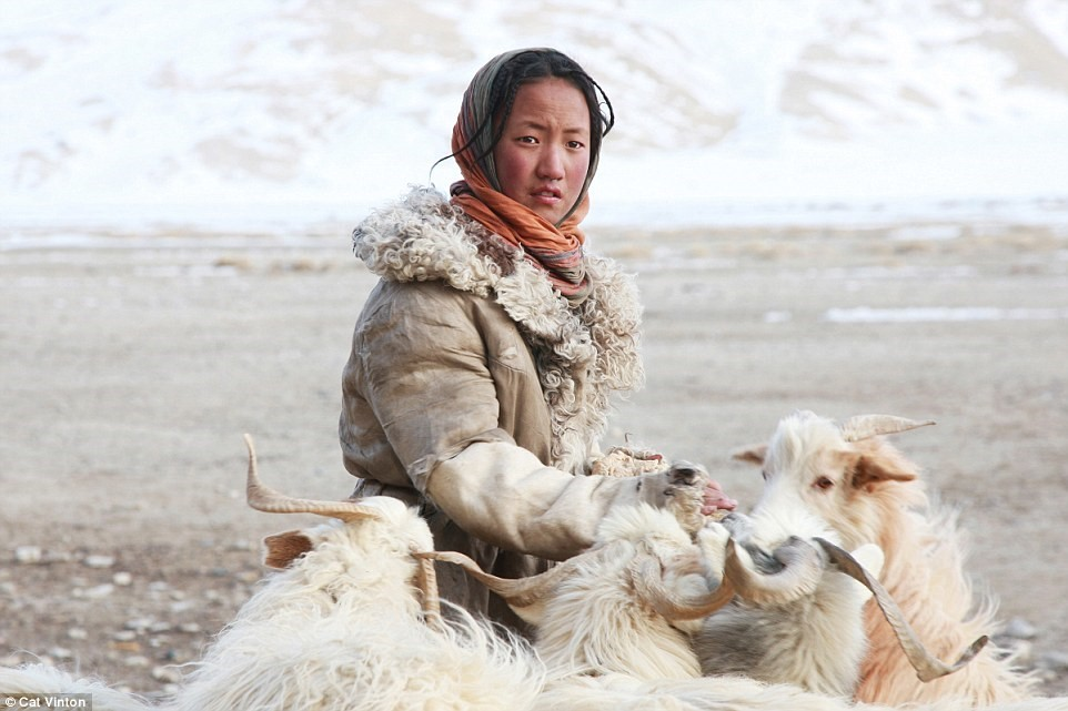 No-money, no-technology, and nomadic life of a tribe in the Himalayas