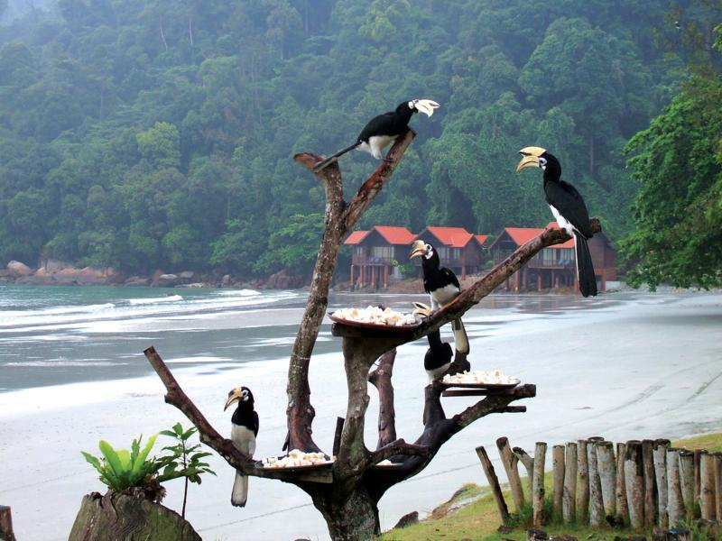 essay about trip to pangkor island