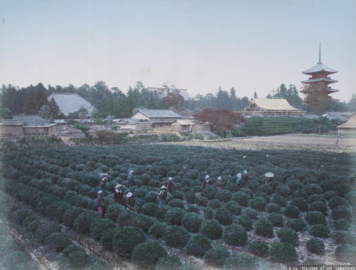 Tea-Yard at Uzi, Yamashiro - Image by New York Public Library
