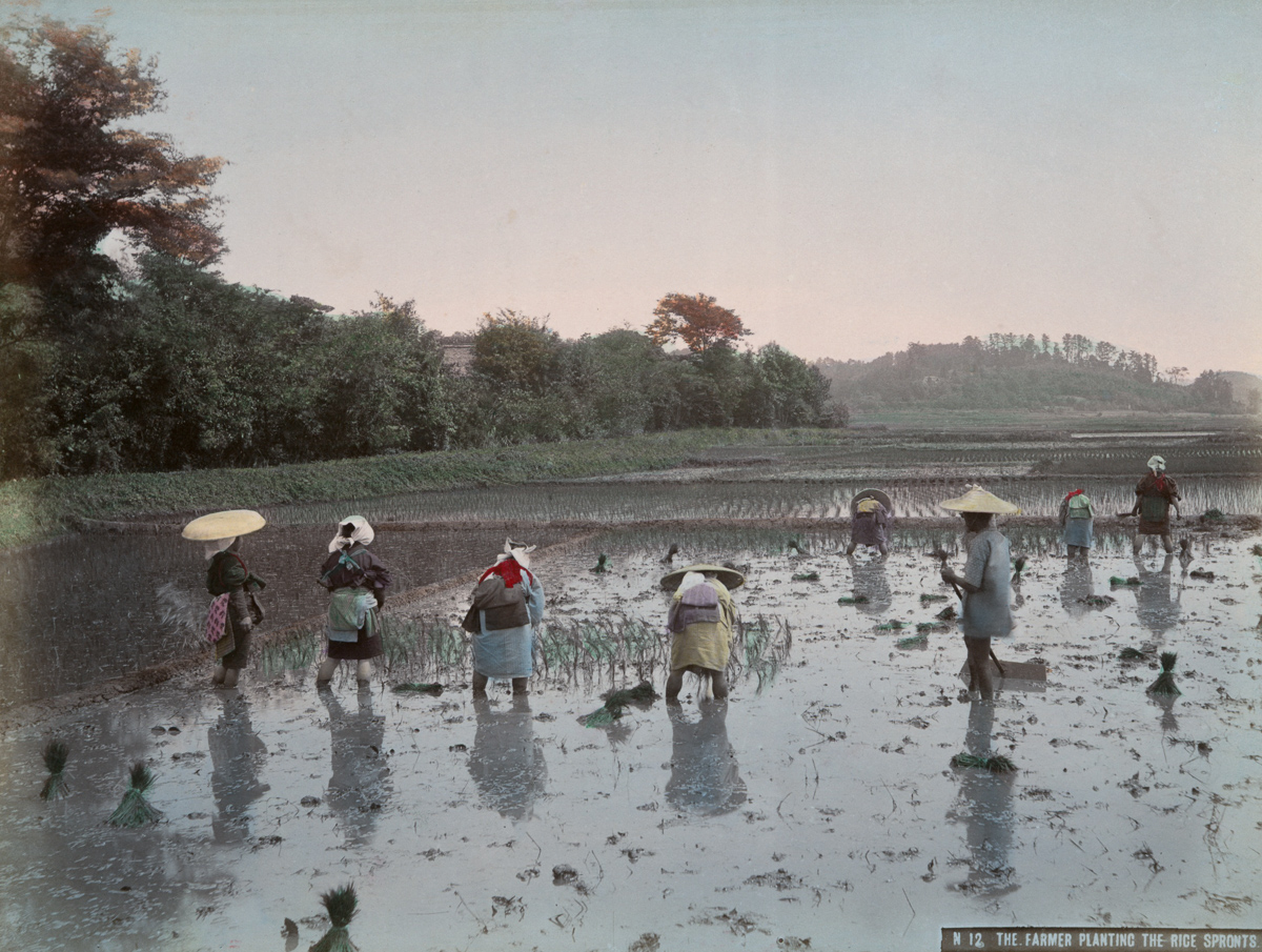 The Farmer Planting the Rice Sprouts - Image by New York Public Library