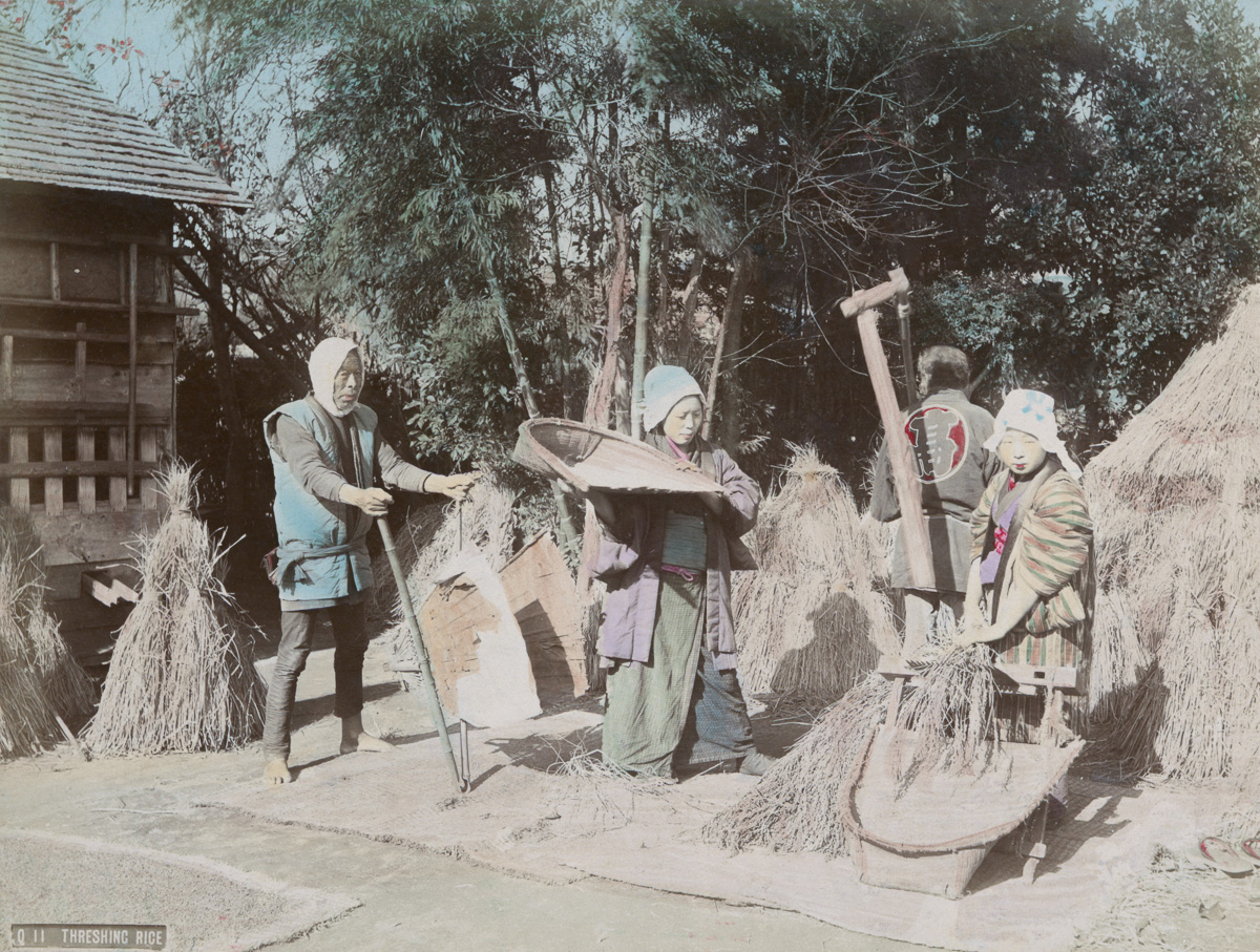 Threshing Rice - Image by New York Public Library