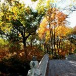 Experience New York City in one day in autumn