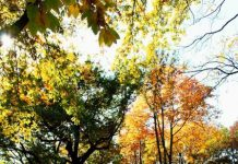 autumn new york travel guide (1)