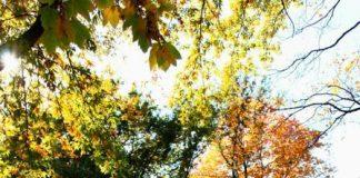 autumn new york travel guide (1)