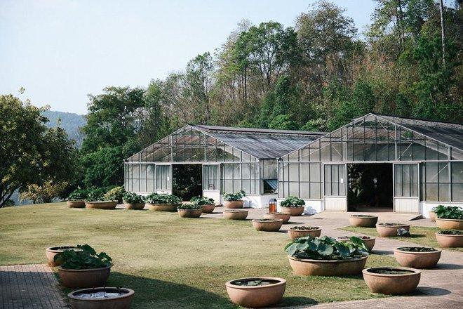 botanic garden cactus nursery chiang mai travel 4