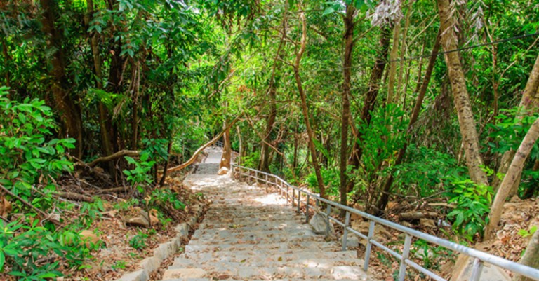 ong dung primary forest con dao island 0
