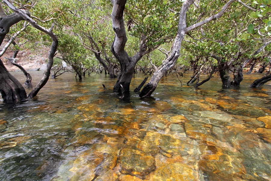 ong dung primary forest con dao island 15