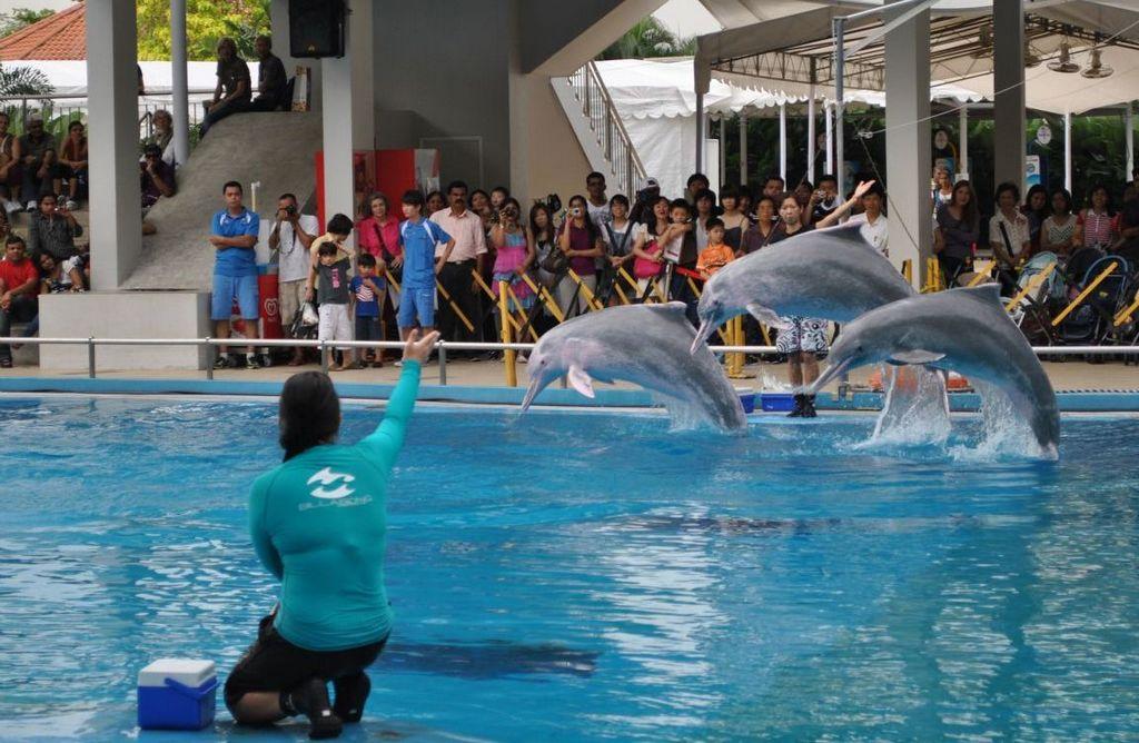 underwater world and dolphin lagoon sentosa singapore 2