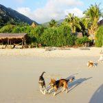 Exploring Jungle Beach Nha Trang — A secret heaven of Vietnam