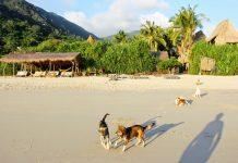 Things to do in Jungle Beach nha trang Vietnam