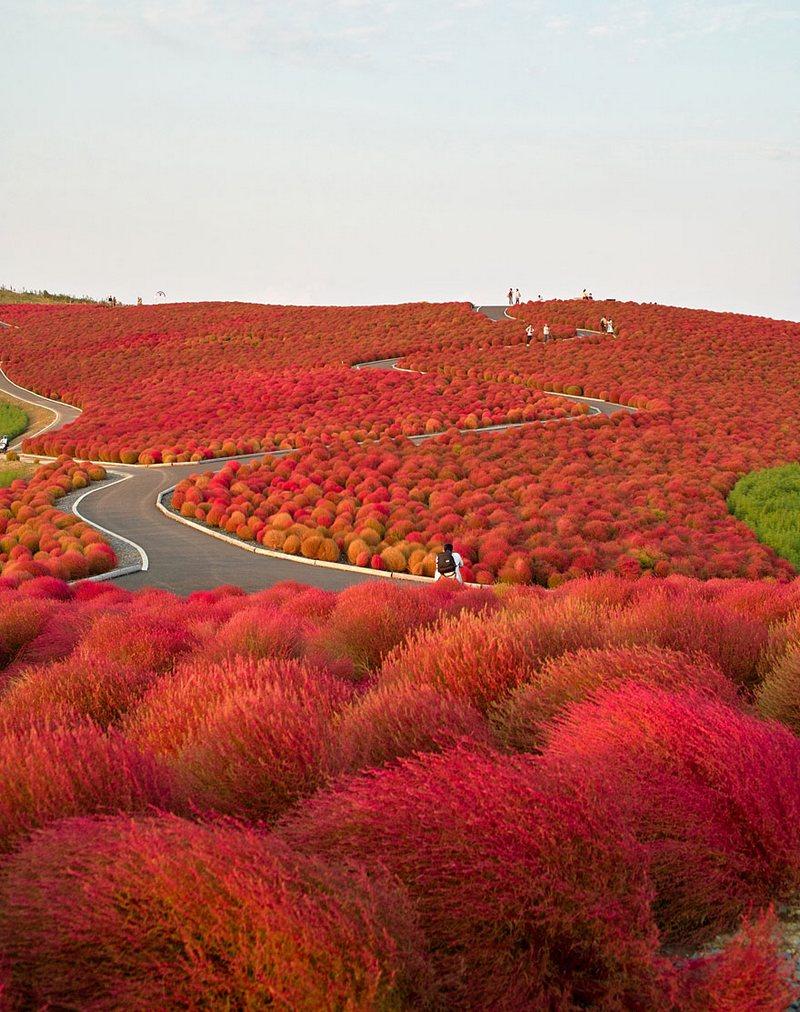 Autumn In Hitachi Seaside Park amazing-places-japan