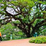 9 wonderful parks and gardens in Singapore you must visit