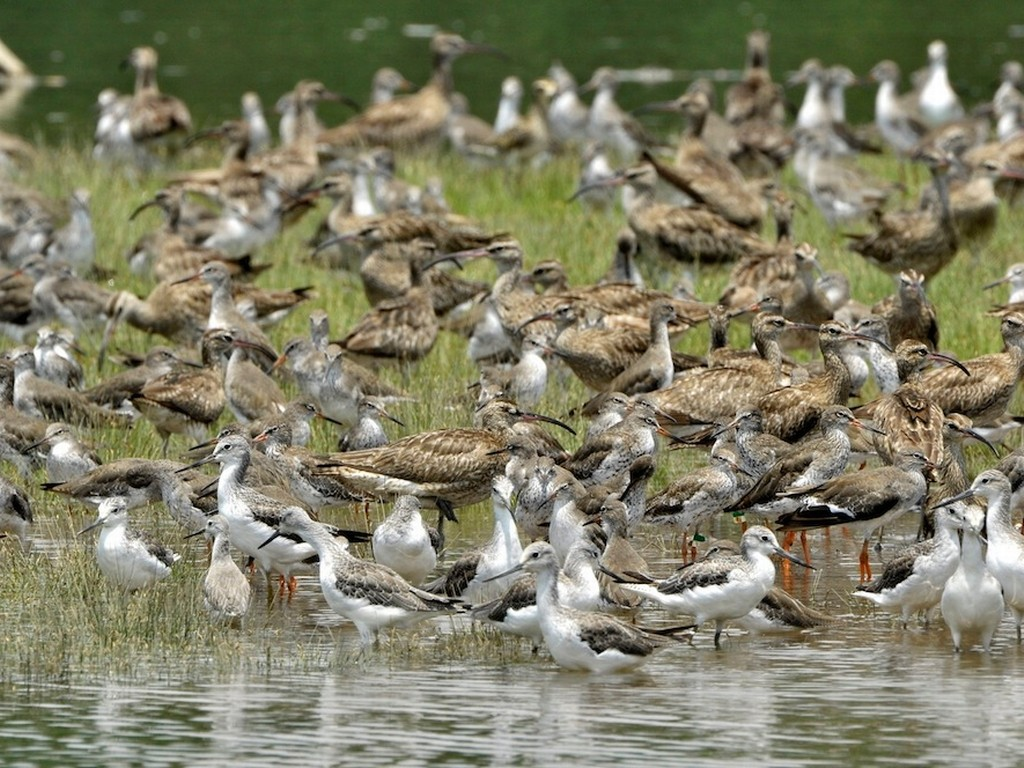 Sungei Buloh Wetland Reserve 21
